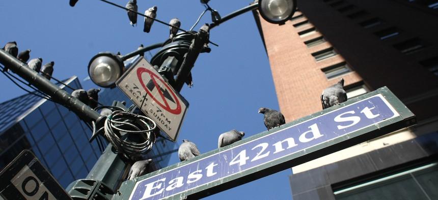 Cuomo shot down the Bird-Friendly Building Council.