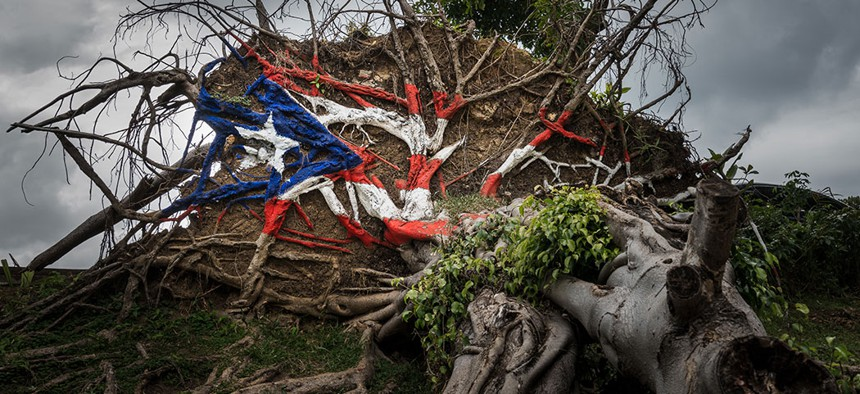 A tree knocked over by Hurricane Maria in Puerto Rico.