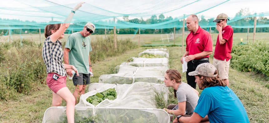 Workers with the Cornell Cooperative Extension examine crops.