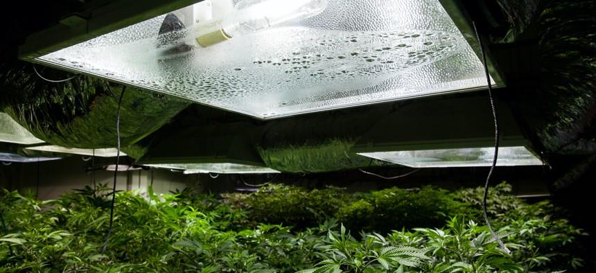 Marijuana grow facilities use high-wattage light fixtures.